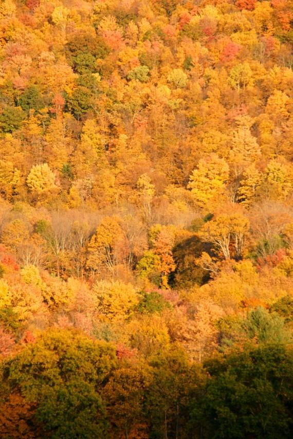 Catskill Hillside– CLICK ME!!!!