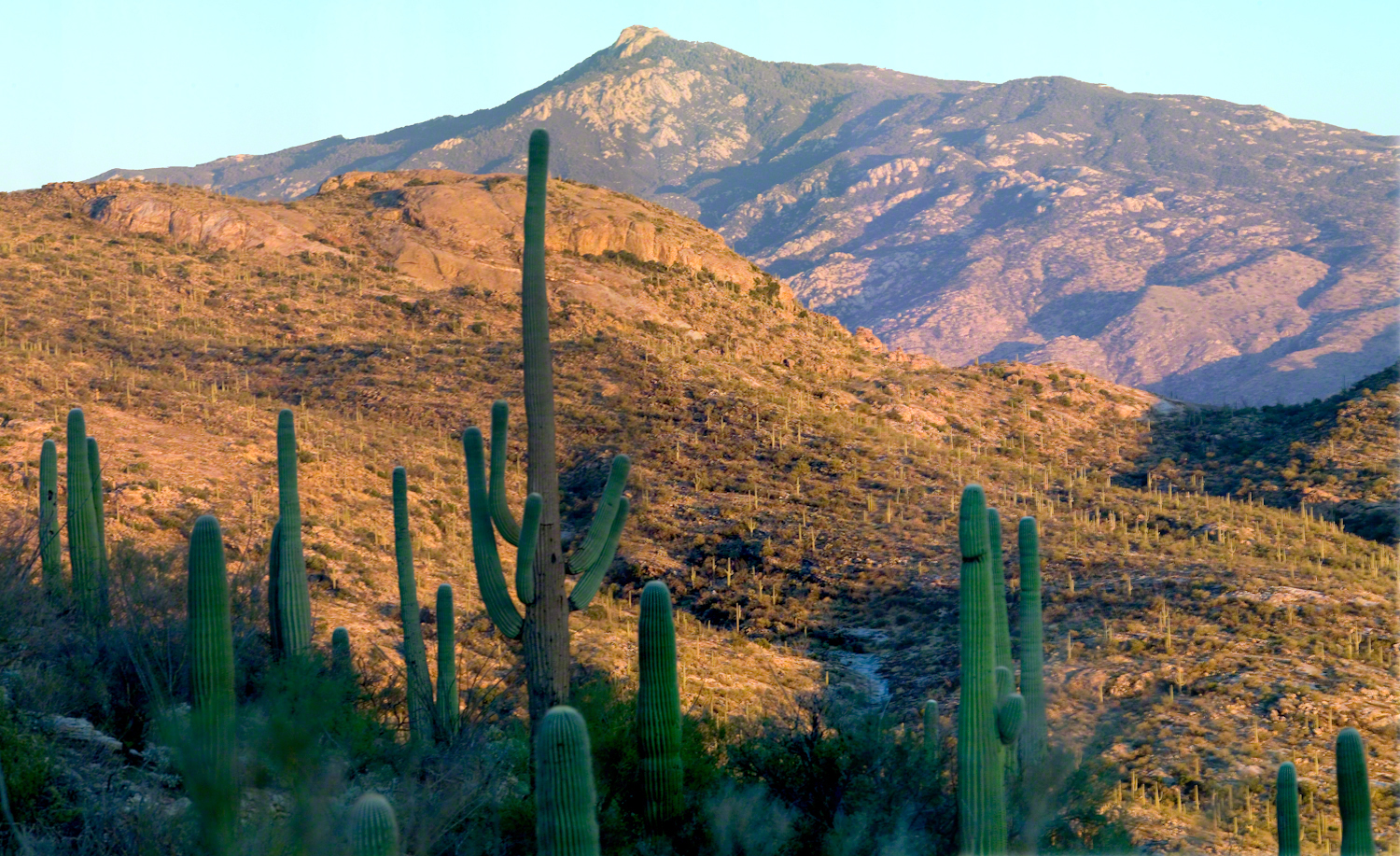 Rincon Peak from the X9 Ranch-- CLICK ME!!!!