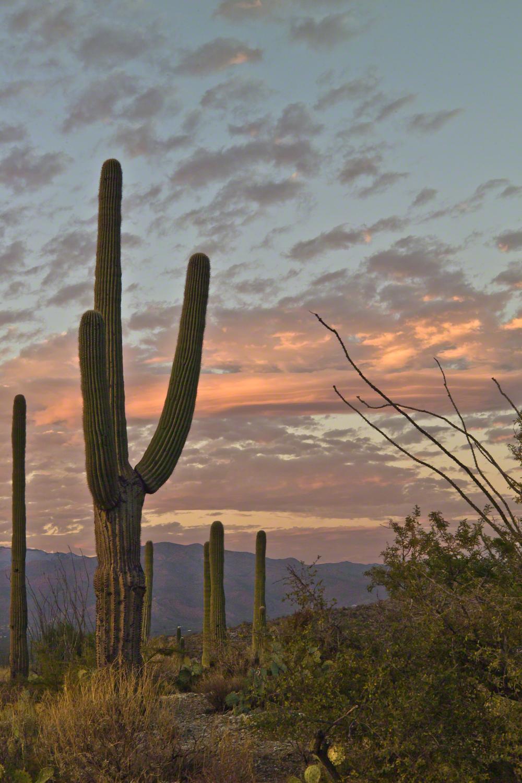 Saguaro Sunset -- CLICK ME!!!!