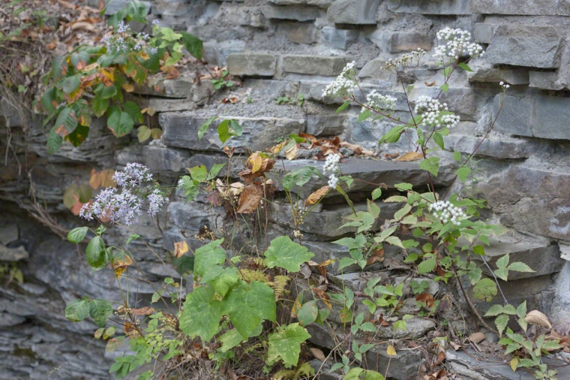 Stone work and asters