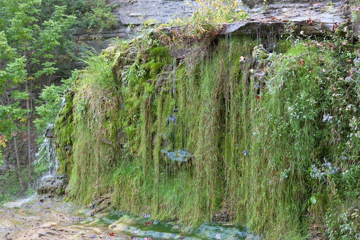 Wall of Moss, Grass and Flowers