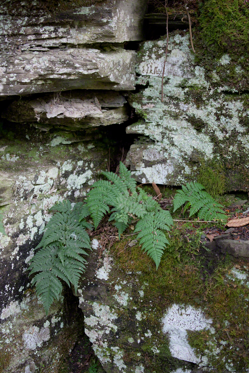 Ferns, Lichen, Gorge Wall