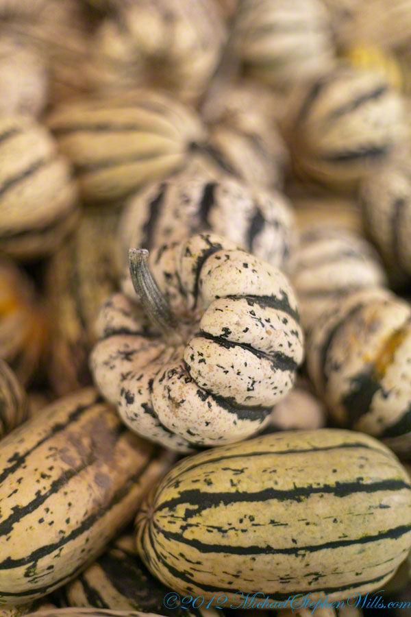 Ornamental Squash / Gourds