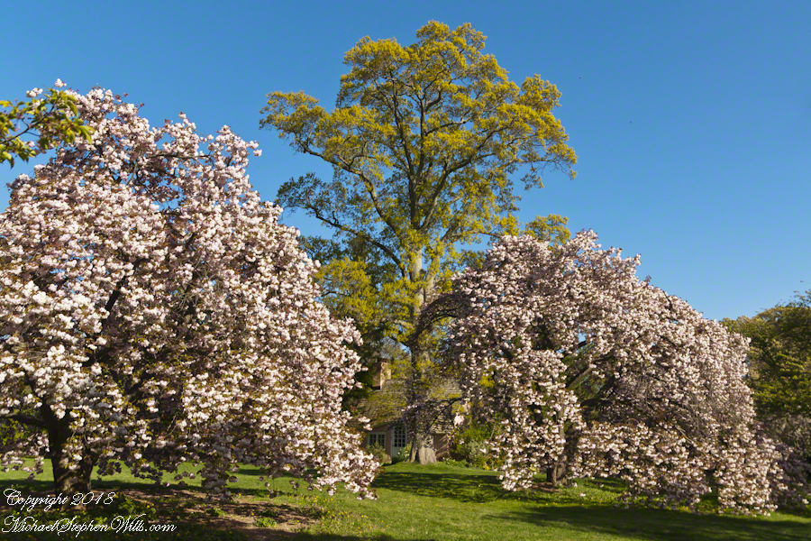 Playhouse with Flowering Cherry and Oak trees – CLICK ME for my Getty Portfolio.