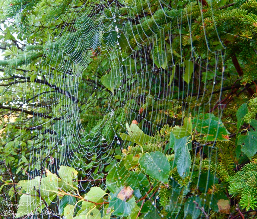 Orb Web with Dew – CLICK ME for more Adirondack photography.
