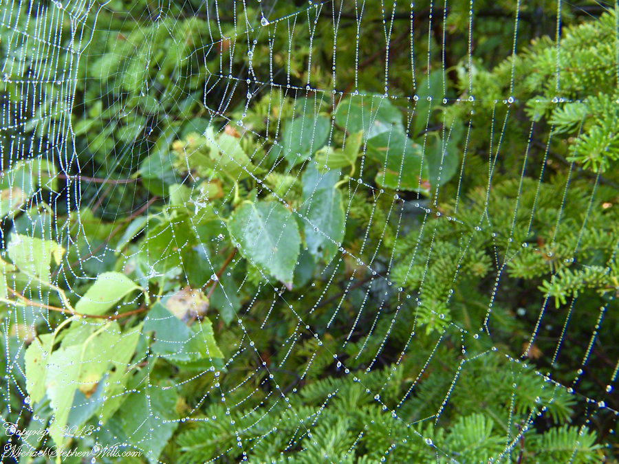 Orb Web with Dew, detail – CLICK ME for more Adirondack photography.