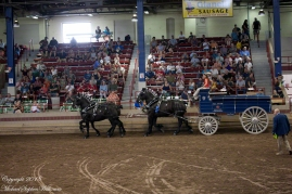 NYSFair4HorseHitch20180902-10