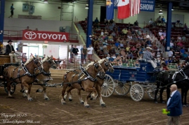NYSFair4HorseHitch20180902-9