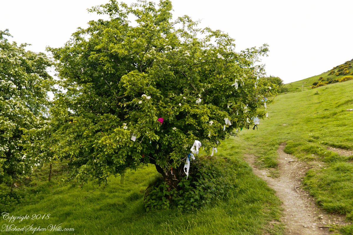 Hawthorn Tree with Offerings