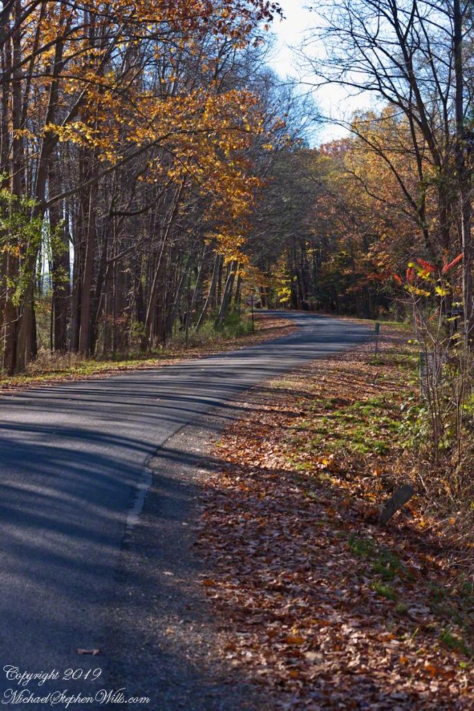 Gorge Road, early November