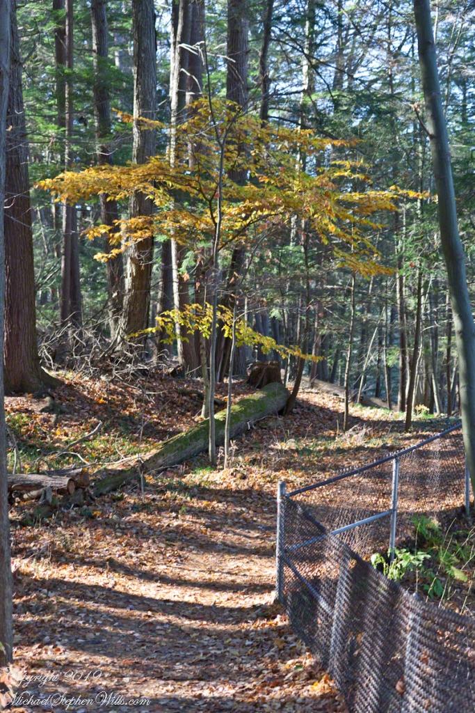South Rim Trail, early November