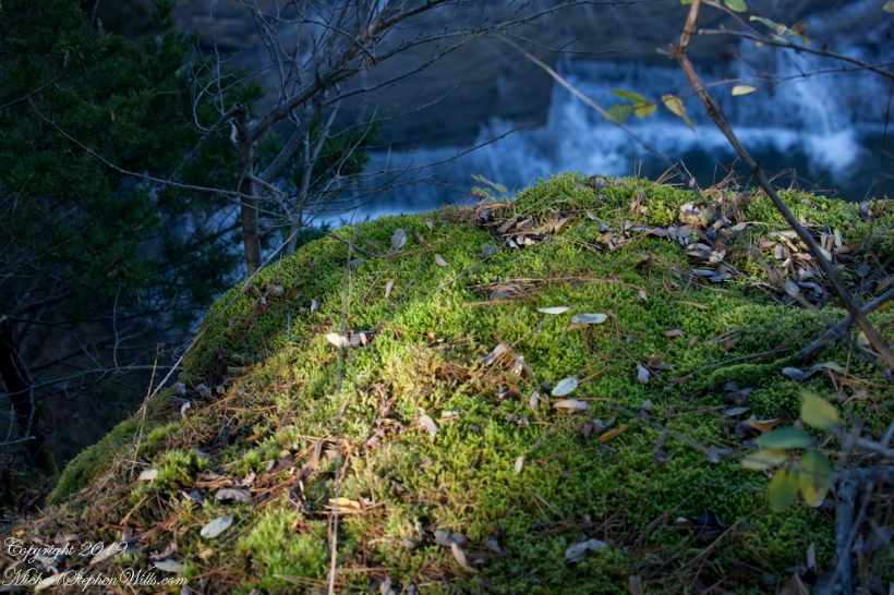 Moss on Cliff Edge