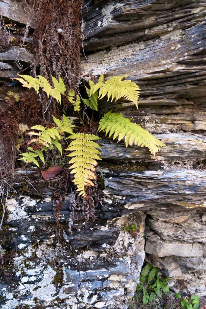 Cliff Stair Wall, autumn with fern generations