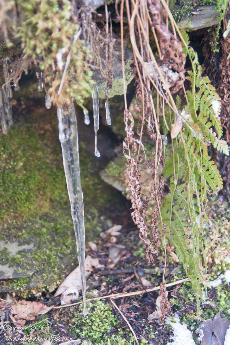 Fresh Icicle with Fern