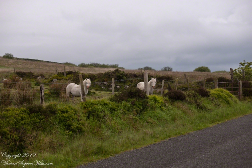 Curious White Horses on Slievenaglogh