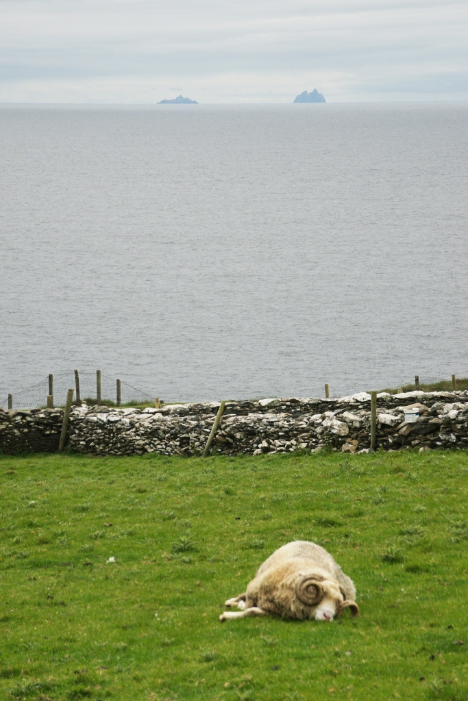 Dingle Peninsula Pastoral Scene with Ram and the Skelligs